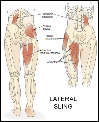 source: https://www.yoga-anatomy.com/lateral-sling-system-core-stability-part-3/
